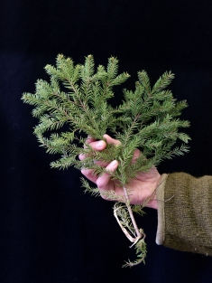 Lea Kömi, Maailmankylä metsä käsikuvat-85