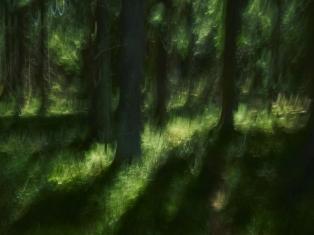 Kuva Antti Kauppi